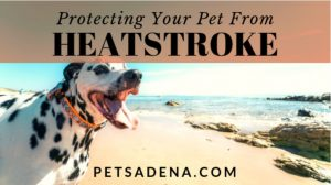 Protecting Your Pets from Heatstroke