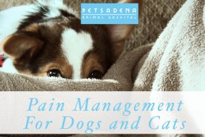 Pain Management For Dogs