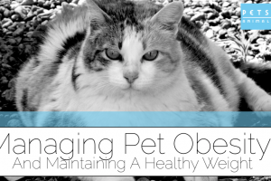 Managing Pet Obesity Image
